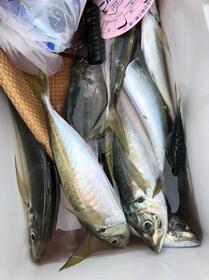 お盆の魚に👍