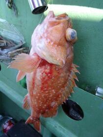動かない魚を動かせる!